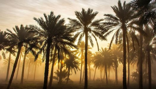 CULTURE VULTURE: BAHRAIN'S MUST-VISIT LANDMARKS